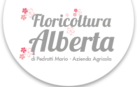Floricoltura Alberta